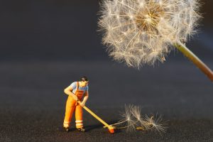 an image of a small, plastic character 'spring cleaning' by brushing up the seeds of a dandelion