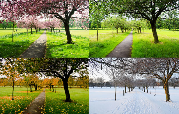 an image of the same place in all four seasons